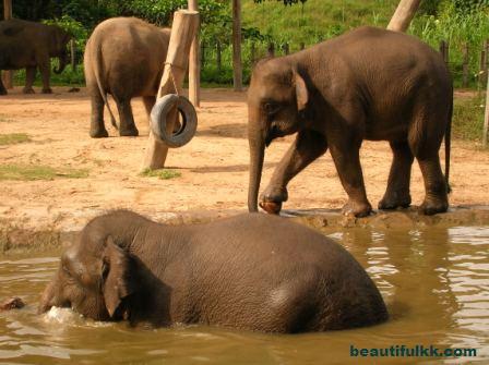 wl-elephant2.jpg